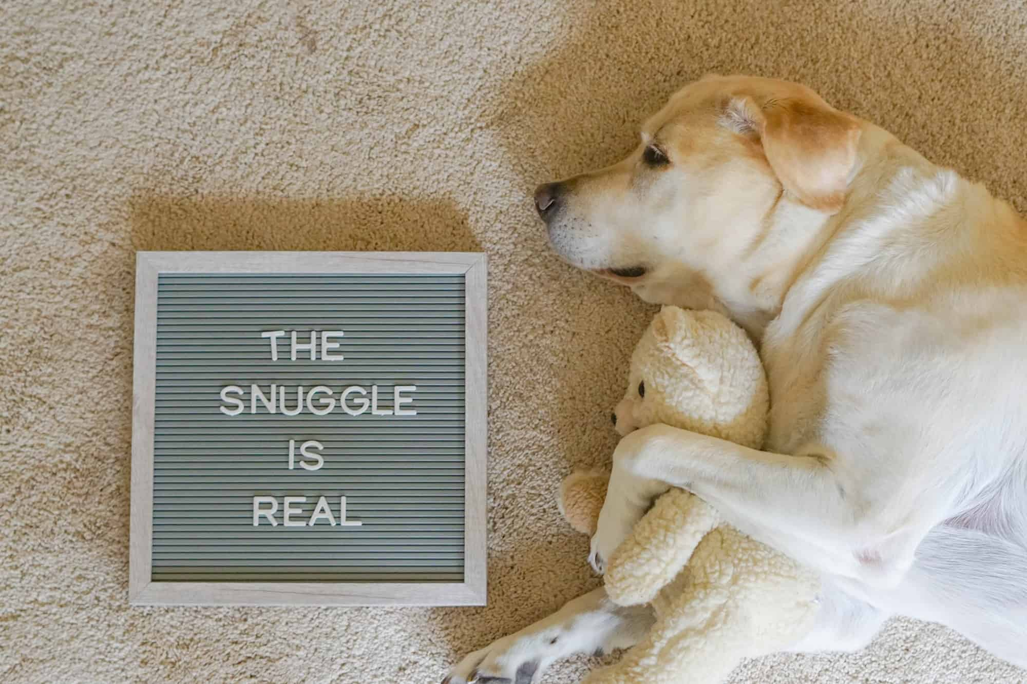 Dog snuggling with stuffed animal and message board saying the snuggle is real